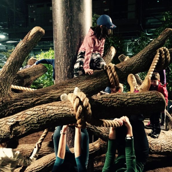 TreeMash-23372