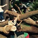 TreeMash-Main1702