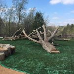 natures-instruments-double-tree-mash-bienenstock-natural-playgrounds-equipment-ontario